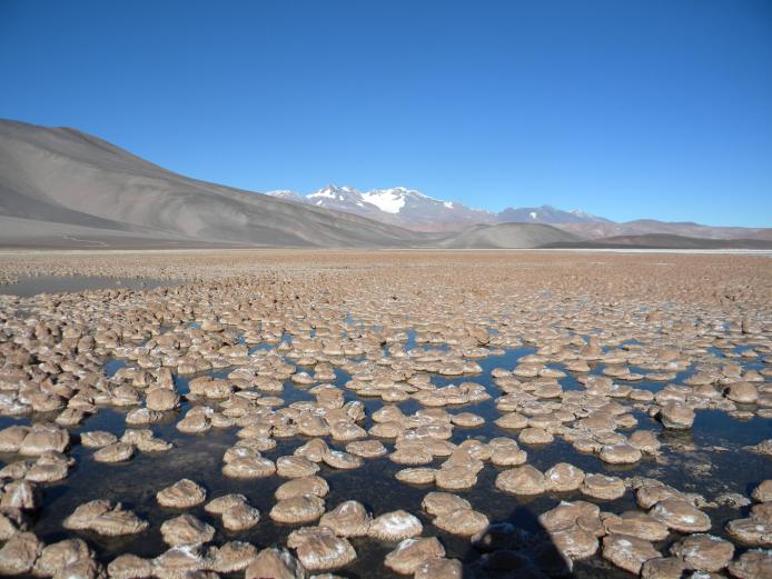 TA1.6: Microbial carbonates, partially exposed, Laguna Negra (Catamarca, Argentina).