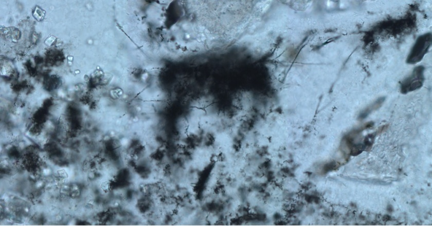 3) Optical microscope image of the filamentous microfossils. Credit: B. Cavalazzi.